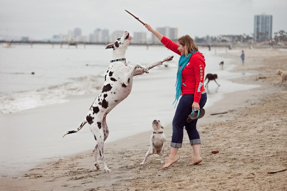 Long Beach Dog Beach