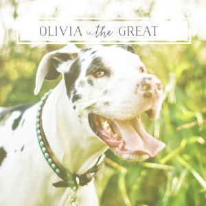 A tribute to Olivia the Great
