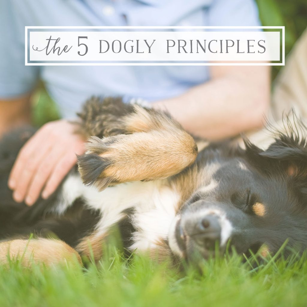 working with dog: 5 Dogly Principles - secrets to success