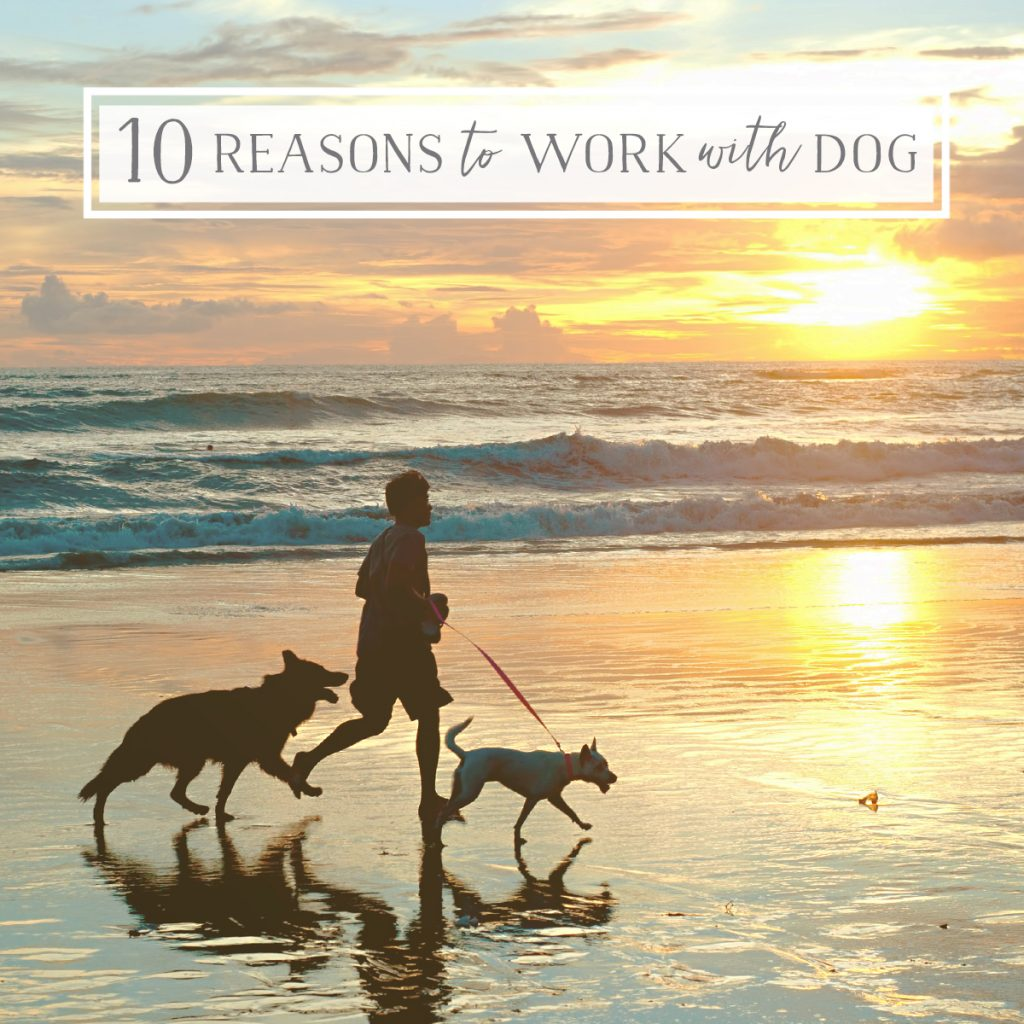 10 Reasons #workingwithdog is Savvy Career Choice