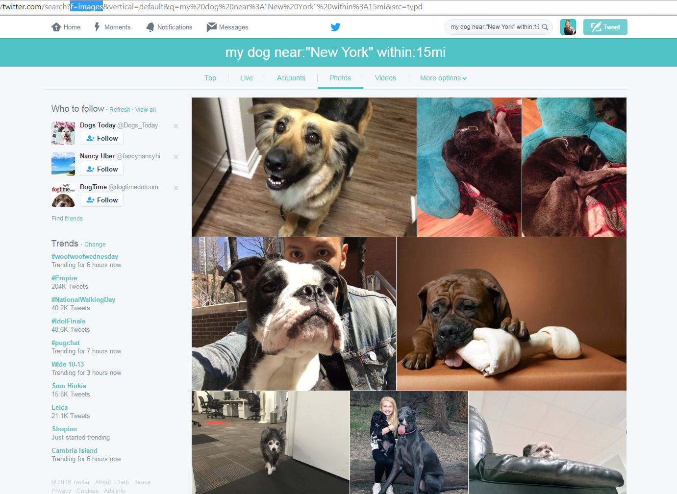 Tweets near NYC, containing 'my dog' and an image