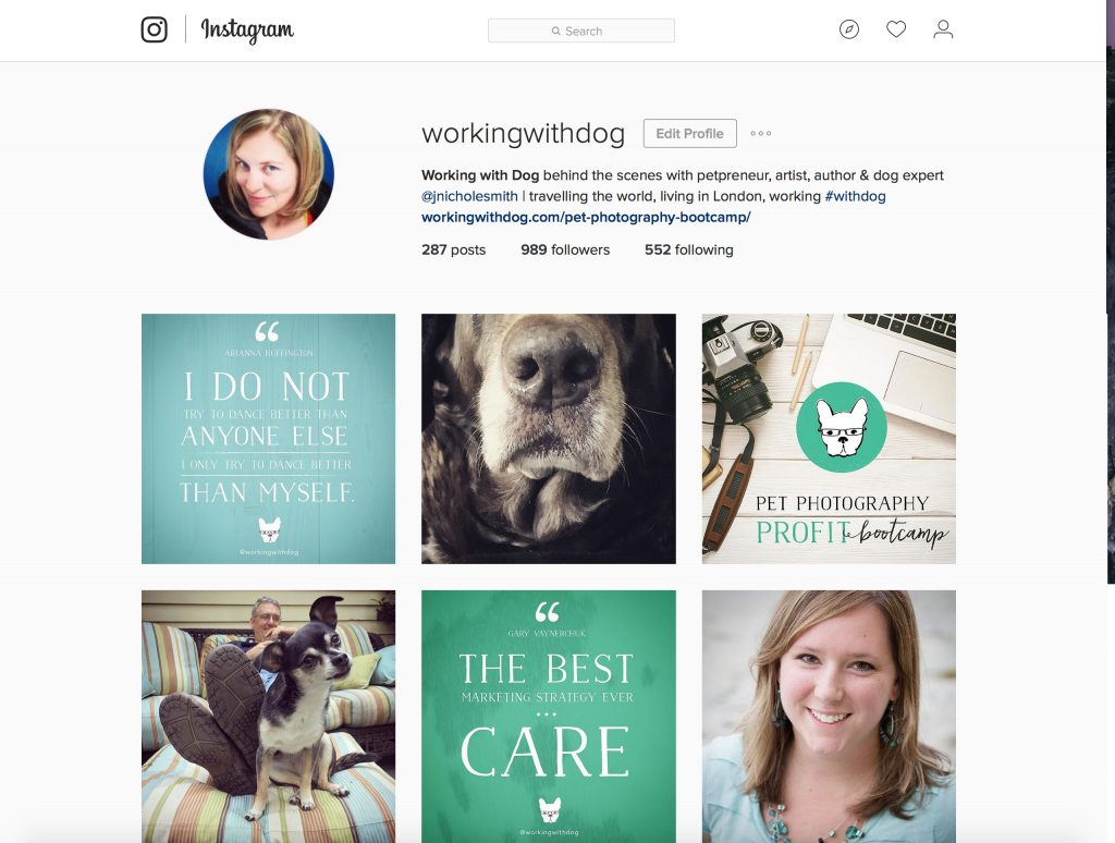 Working with Dog instagram account