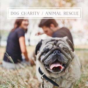 Animal rescue dog charity