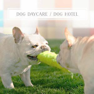 Dog Day care Dog Hotel
