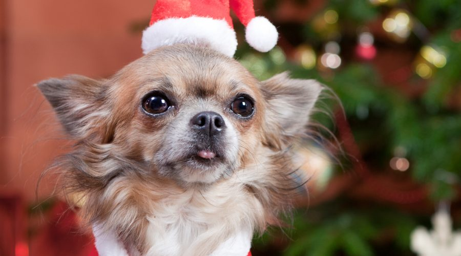 6 Essential Holiday Retail Tips for Pet Goods