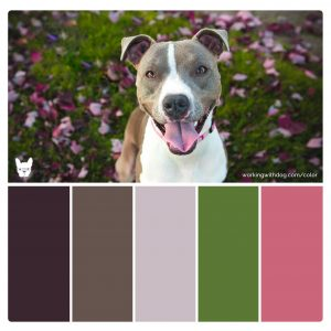 'Happy Pitty' Rich Color Palette for Pet Brand Inspiration