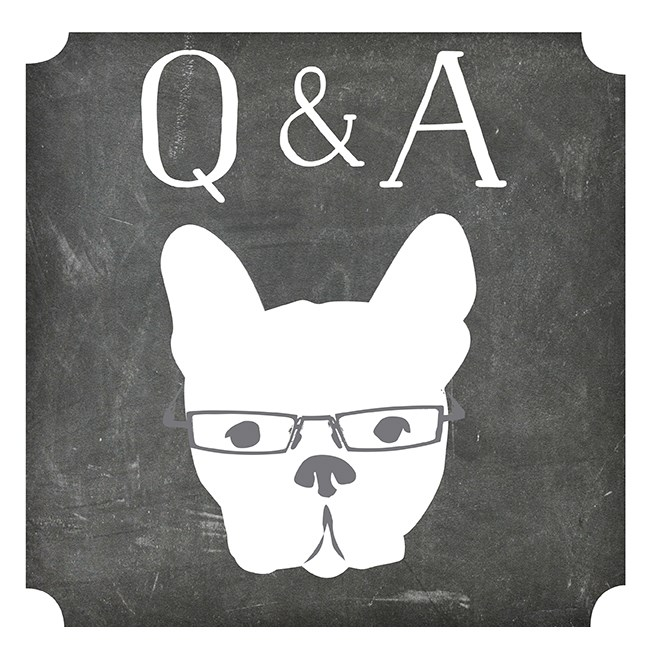 Live Q+A with Nic + the working with dog team
