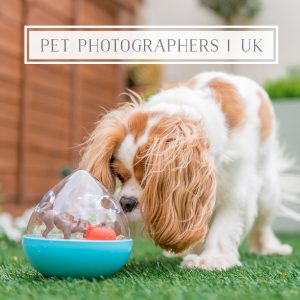 Commercial Pet Photographers in the UK
