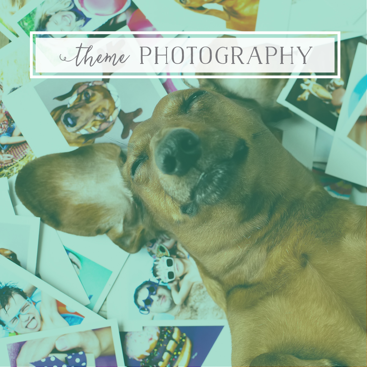Photography for Pet Brands