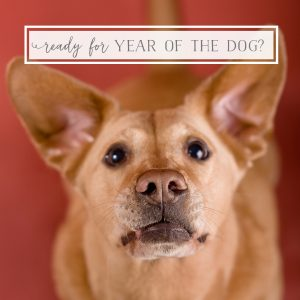 Is your Pet Business Ready for the Year of the Dog?