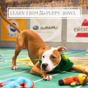 Marketing Genius Behind the Puppy Bowl
