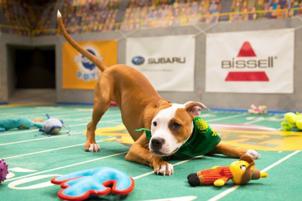 Puppy Bowl by Animal Planet