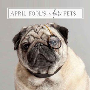 April Fool's for Petpreneurs