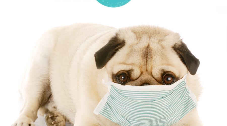 Coronavirus: Resources for Pet Businesses and Petpreneurs