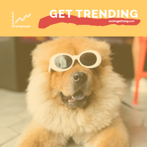 May 2020 Pet Trends & Upcoming Topics