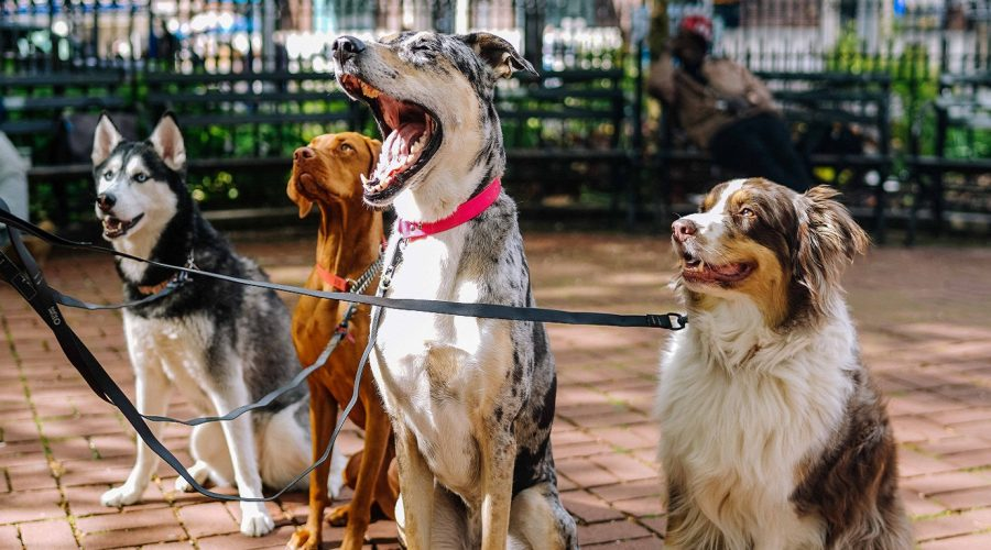 How Can I Find and Screen Great Dog Walking Contractors or Employees?